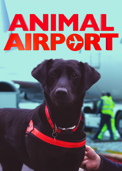 Animal Airport