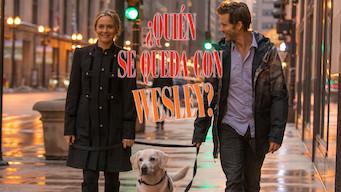 ¿Quién se queda con Wesley? (2016)